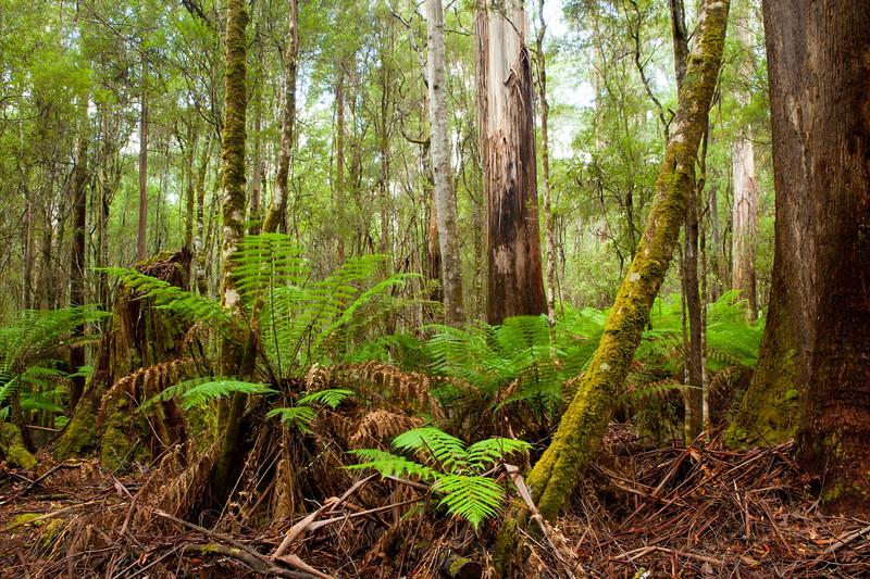 Mount Fields NP, Tassie