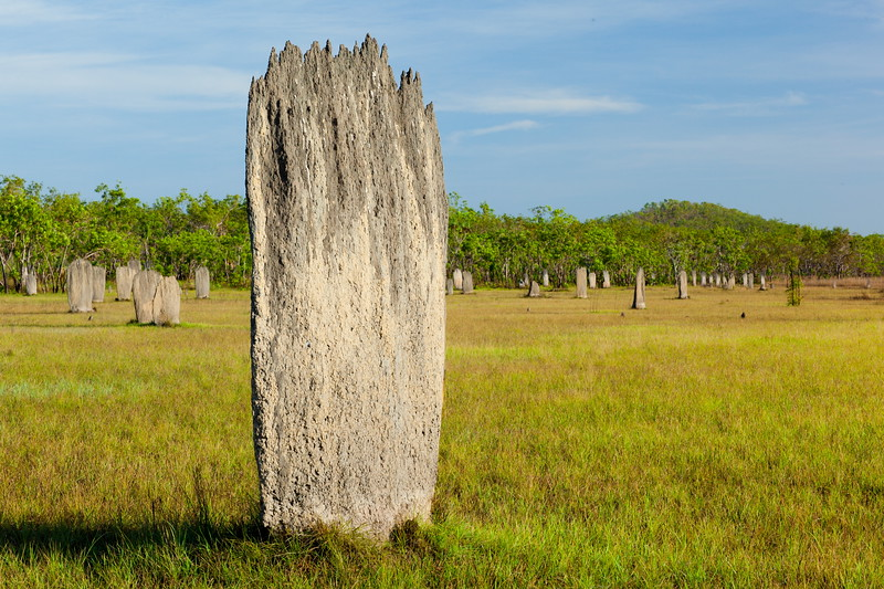 """Magnetic"" termite mounds, Litchfield, NT"