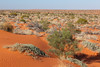 The Simpson Desert (a later / different trip)
