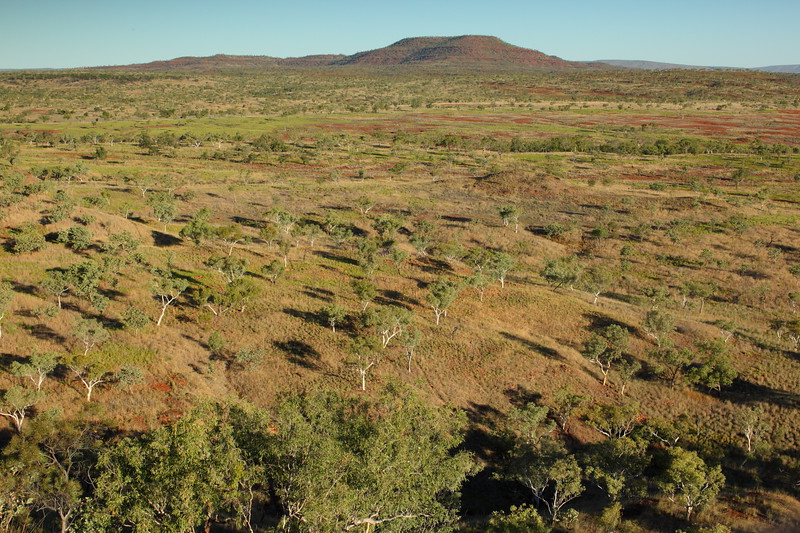 Mornington Wilderness Sanctuary run by Australian Wilderness Conservancy
