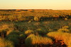 Sunset scenery on the Duncan...spinifex & gorges