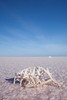 Encrusted in salt, Lake Eyre
