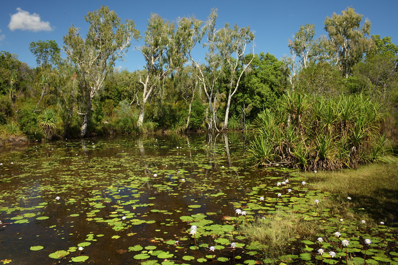 Lily pond, near Mitchell falls