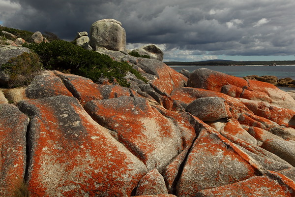 Red lichen granite rocks at the S end of Mt William National Park. I absolutely loved these rocks, which are a specialty of this NE coast of Tasmania