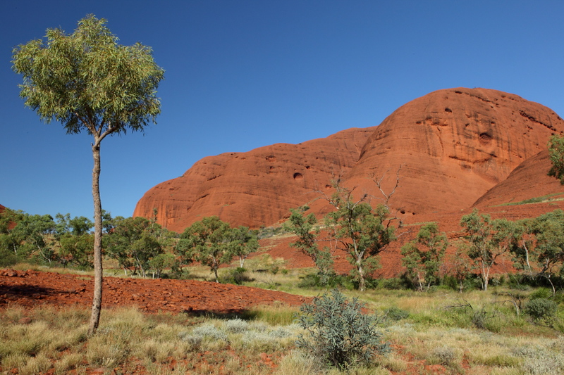 The olgas, on the fantastic walk around them. Much more interesting than walking around the rock!