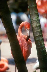 Flamingo Portrait. Game Park. Boca Ratonm Florida. Client: Stock Photography Agency.