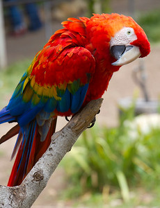 Santa Barbara Zoo, CA