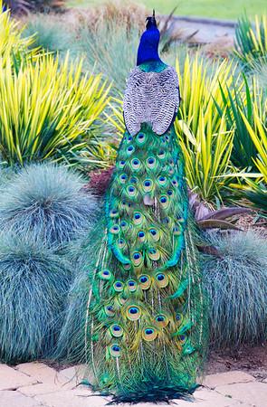 Arboretum, Arcadia, CA