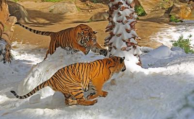 Snow Days at LA Zoo