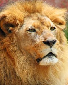 LA Zoo - Lionel passed away April 2011