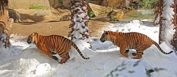 Snow Days at LA Zoo