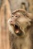 Macaque challenge