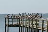 Pelican lineup