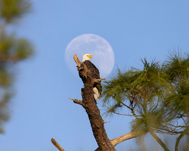 Moon over the Eagle