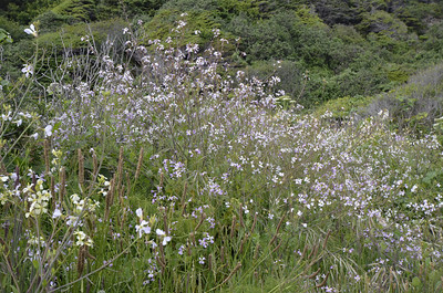 Brassicaceae and other unknown wildflowers