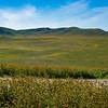 carizzo plains 040217_087_e