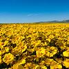 carizzo plains 040217_234_e