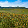 carizzo plains 040217_088_e