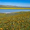 carizzo plains 040217_073_e