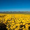 carizzo plains 040217_233_e