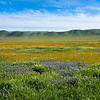 carizzo plains 040217_174_e