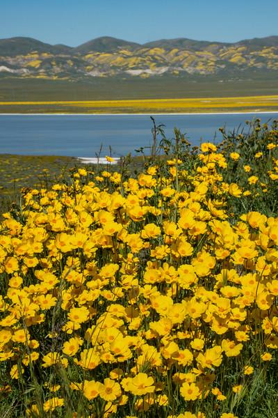 carizzo plains 040217_060_e