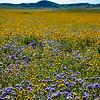 carizzo plains 040217_117_e
