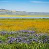 carizzo plains 040217_167_e