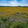 carizzo plains 040217_125_e