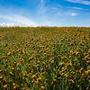 carizzo plains 040217_021_e