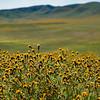 carizzo plains 040217_089_e