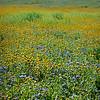 carizzo plains 040217_111_e
