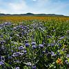 carizzo plains 040217_110_e