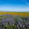 carizzo plains 040217_171_e