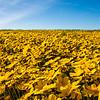carizzo plains 040217_235_e