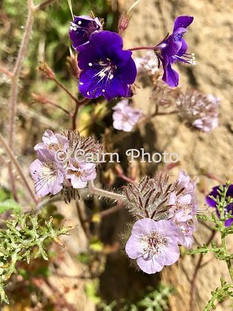 Wigania Flowers