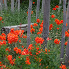 Poppies and Bench #2