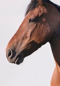 Wildhorse7