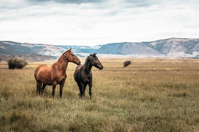 WyomingMustangs