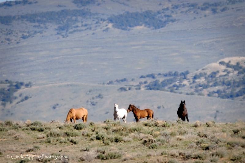 Mustang Ridge<br /> <br /> Sandwash Basin HMA, Colorado