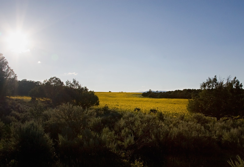 Monero Mustang Sanctuary, Tierra Amarilla, NM