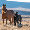 Sand Wash Basin Mare Starlight With Her Colt Flight