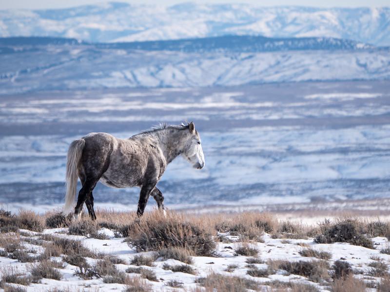 Wild Stallion Slate