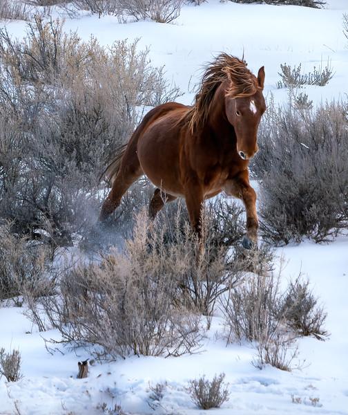 Wild Stallion Mystery Posturing