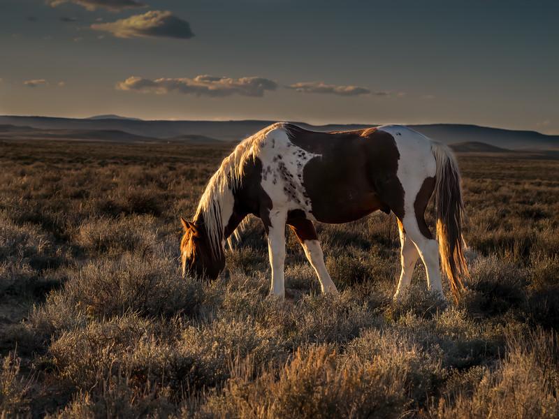 Wild Stallion Tango