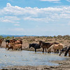 The Colorful Wild Horse Bands of Sand Wash Basin Relaxing at the Pond
