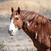 Wild Stallion Pico - Sand Wash Basin, Northwest Colorado