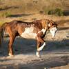 Wild Stallion Ranger Posturing