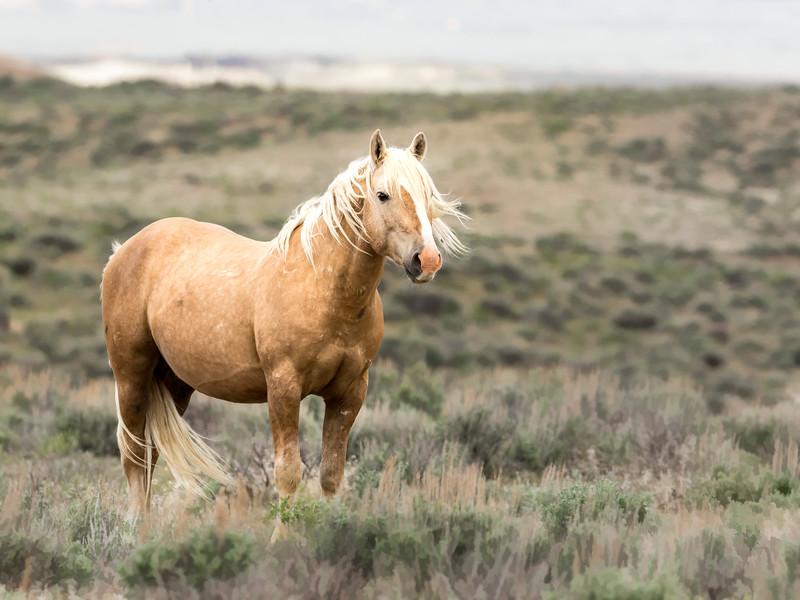 Wild Stallion Sundance