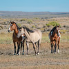 Three Generations of Sand Wash Basin Mares - Dazzle, Felicity and Razzle